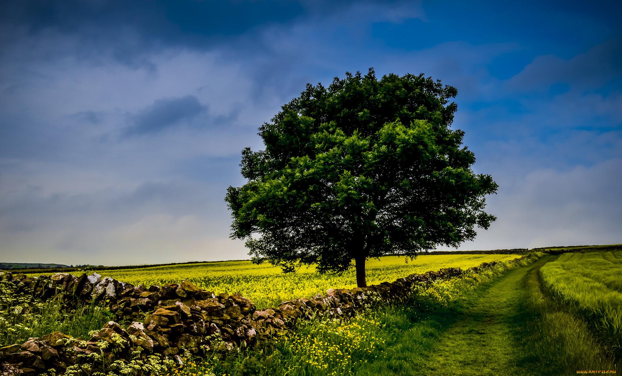 Поле деревья картинка